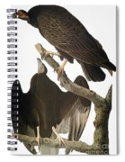 Audubon: Turkey Vulture Spiral Notebook