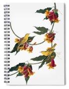 Audubon: Vireo, 1827-38 Spiral Notebook