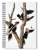 Audubon: Woodpecker Spiral Notebook