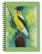 Aureate Spiral Notebook
