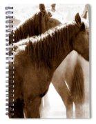 Wild Horses - Australian Brumbies 3 Spiral Notebook