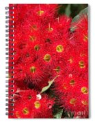 Australian Native Eucalyptus Flowers Spiral Notebook