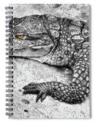 Australian Shy Crocodile  Spiral Notebook