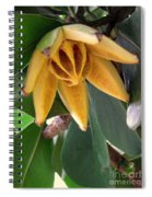 Autograph Tree Seed Pod Spiral Notebook