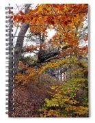 Autumn At Beech Forest Spiral Notebook