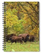 Autumn Bison Spiral Notebook