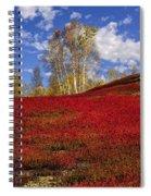 Autumn Birches And Barrens Spiral Notebook