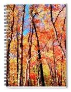 Autumn Canopy Spiral Notebook
