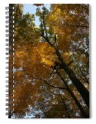 Autumn Canopy Spiral Notebook