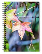 Autumn Color Changing Leaves On A Tree Branch Spiral Notebook