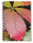 Autumn Colours Spiral Notebook