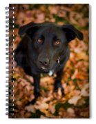 Autumn Dog Spiral Notebook