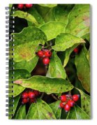 Autumn Dogwood Berries Spiral Notebook