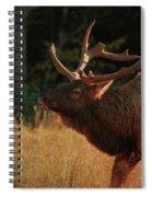 Autumn Elk In Cataloochee Valley Textured Spiral Notebook