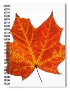 Autumn Leaf 3 Spiral Notebook