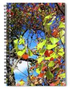 Autumn Leaves 243 L Spiral Notebook