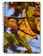 Autumn Leaves Macro 1 Spiral Notebook