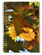 Autumn Leaves Macro 2 Spiral Notebook