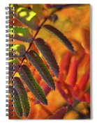 Autumn Leaves - Patagonia Spiral Notebook