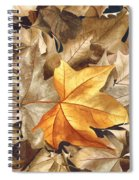 Autumn Leaves Series 2 Spiral Notebook