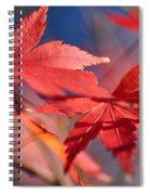 Autumn Maple Spiral Notebook