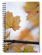 Autumn Maple Leaves Spiral Notebook