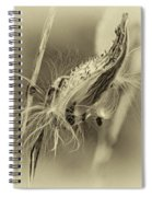 Autumn Milkweed 7 - Sepia Spiral Notebook
