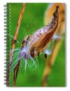 Autumn Milkweed 7 Spiral Notebook