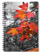 Autumn On Black And White Spiral Notebook