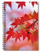 Autumn Pastel Spiral Notebook