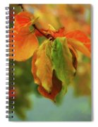 Autumn Persimmon Leaves Spiral Notebook