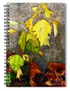 Autumn Rainbow Spiral Notebook