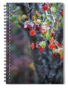 Autumn Red Spiral Notebook