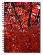 Autumn Red Trees 2015 Spiral Notebook