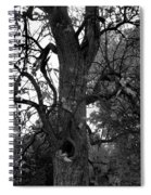 Autumn Spook In Black And White Spiral Notebook