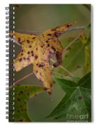 Autumn Spotted Spiral Notebook