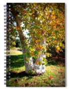 Autumn Sycamore Tree Spiral Notebook