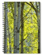 Autumn Through The Trees Spiral Notebook