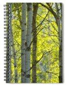 Autumn Through The Trees Spiral Notebook