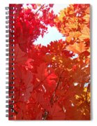 Autumn Trees Red Orange Fall Trees Art Baslee Troutman Spiral Notebook