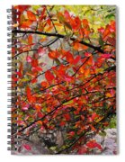 Autumn Trees Rock City Spiral Notebook