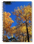 Autumn Yellow Foliage On Tall Trees Against A Blue Sky In Palermo Spiral Notebook
