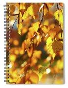 Autumnal Curtain Spiral Notebook