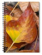 Autumns Color Palette Spiral Notebook