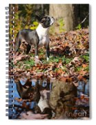 Autumn's Reflection Spiral Notebook