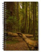 Avenue Of The Giants Spiral Notebook
