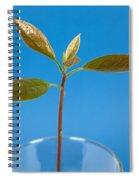Avocado Seedling Spiral Notebook
