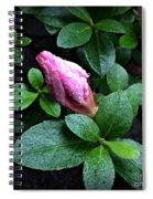 Awakening - Flower Bud In The Rain Spiral Notebook
