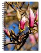Awaking From Hibernation Spiral Notebook