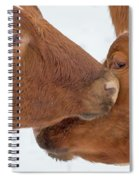 Ayrshire Affection Spiral Notebook